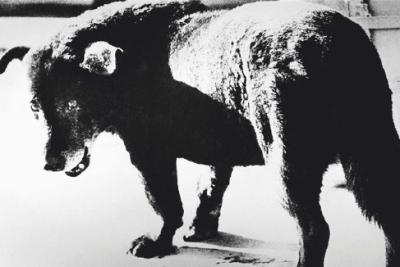 Daido Moriyama Stray Dog,1971