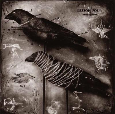 skinning bird