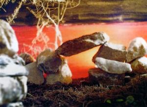 ΜΕΤΑΓΕΙΤΝΙΩΝ μήνας αφιερωμένος στον Απόλλωνα που παρέστεκε στην αλλαγή γειτόνων