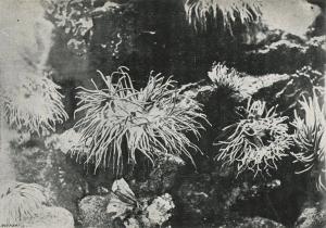 μία από τις πρώτες υποβρύχιες φωτογραφίες