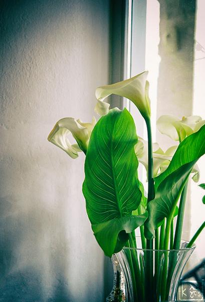 Άνοιξη! Springtime! © καππαλάμδα