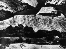 Mario Giacomelli, Presa di Coscienza sulla natura, 1970-76