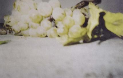 grapes II, 1997 by Cy Twombly © Nicola Del Roscio Foundation