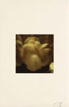 Tulips,1985 by Cy Twombly © Nicola Del Roscio Foundation